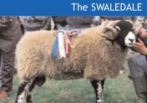 4 The Swaledale