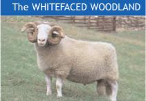5 The Whiteface Woodland