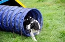Chadkirk Dog Training Club
