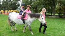 Pony Patch